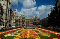Flower Carpet - Brussels Grand Place #04